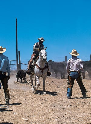 WD Ranch Roping